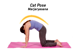 Cat Pose Marjaryasana Mahr Jahr Ee AHS Uh Nuh Is Often Paired With Cow Bitilasana Bee Tee LAHS For A Gentle Full Body Stretch