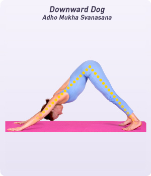 The Sun Salutation Surya Namaskara SOOR Yuh Nah Muh SKAR Uh Is A Sequence Of Yoga Poses Performed In Particular